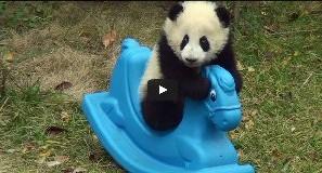Panda játszik a pónival